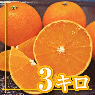 【愛媛県産】愛媛28号|えひめ28号|ご家庭用|3Kg