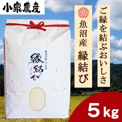 ☆新米☆縁結び|白米【5kg】×1