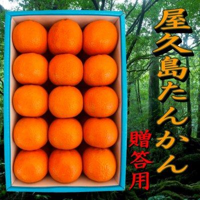 屋久島たんかん5kg|L〜2Lサイズ|贈答用|鹿児島県産