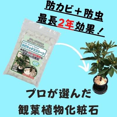 植物 観葉植物用 防カビ剤入り化粧石「カビキックスストーン」800g 大理石の化粧砂利 カビ 防止